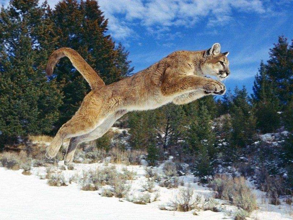 Kevin Richardson Kevin Richardson si udělal neuvěřitelné pouto důvěry s velkými kočkami, jsou to gepardi, levharti a lvi - král džungle.