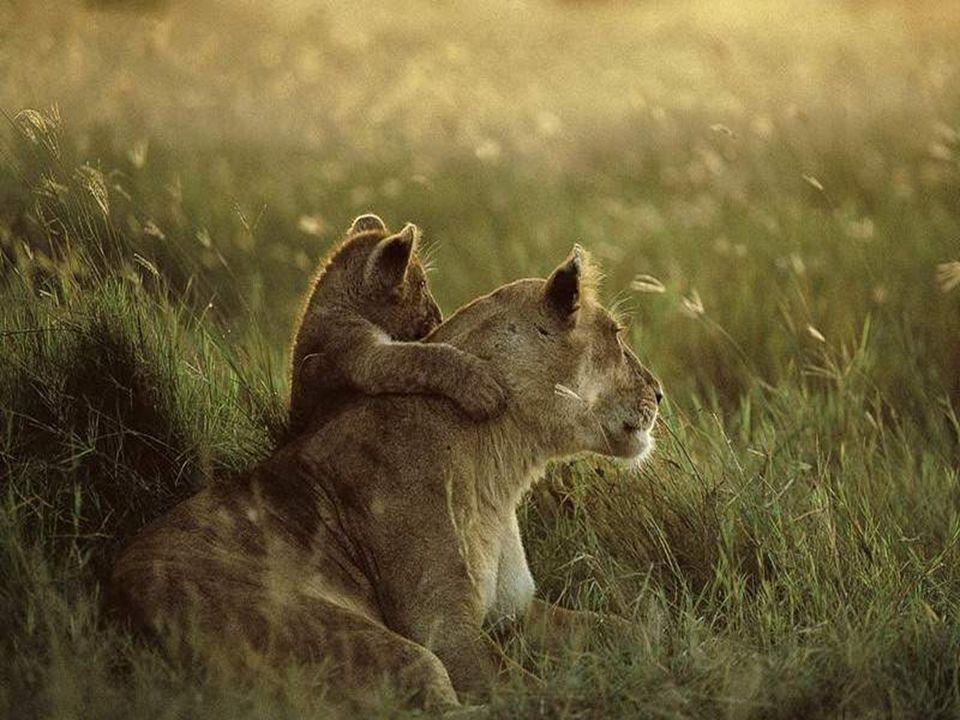 Richardson bydlí v Wildlife Reserve nedaleko Johannesburku v Jihoafrické republice a má instiktivní dar, který vám umožní komunikovat bezpečně s těmito divokými zvířaty.