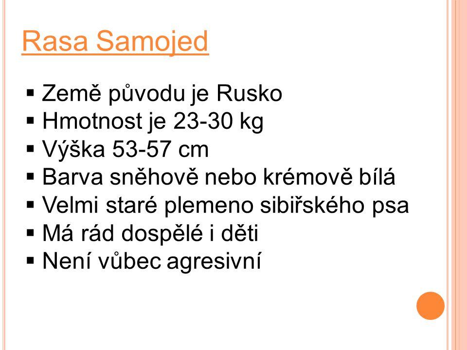 Rasa Samojed  Země původu je Rusko  Hmotnost je 23-30 kg  Výška 53-57 cm  Barva sněhově nebo krémově bílá  Velmi staré plemeno sibiřského psa  M