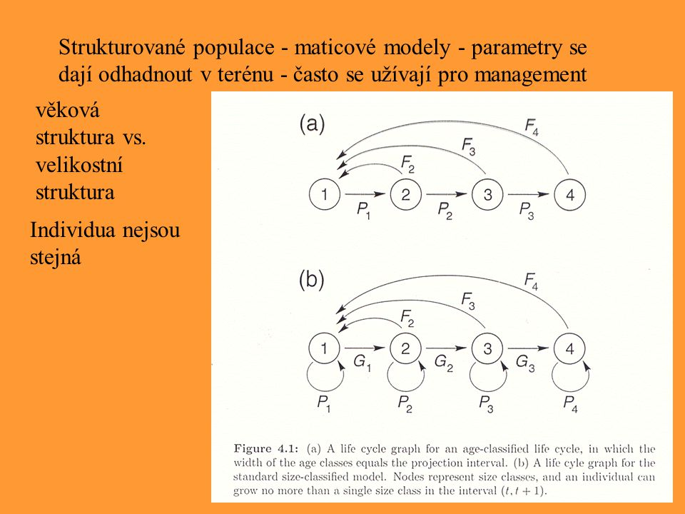 Strukturované populace - maticové modely - parametry se dají odhadnout v terénu - často se užívají pro management věková struktura vs. velikostní stru