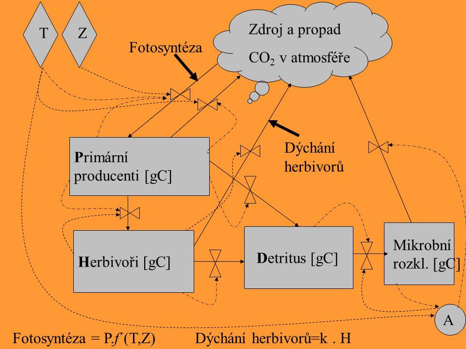 Primární producenti [gC] Herbivoři [gC] Detritus [gC] A TZ Zdroj a propad CO 2 v atmosféře Fotosyntéza Mikrobní rozkl. [gC] Dýchání herbivorů Fotosynt