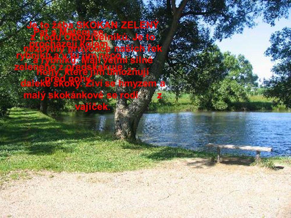 Pat s Matem se procházejí kolem rybníku a v tu jim něco zeleného z předskakuje před nohy.