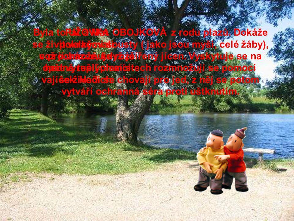 Při procházce se Pat a Mat rozhodli, že se trochu ovlaží. A tak se vydali k rybníku.