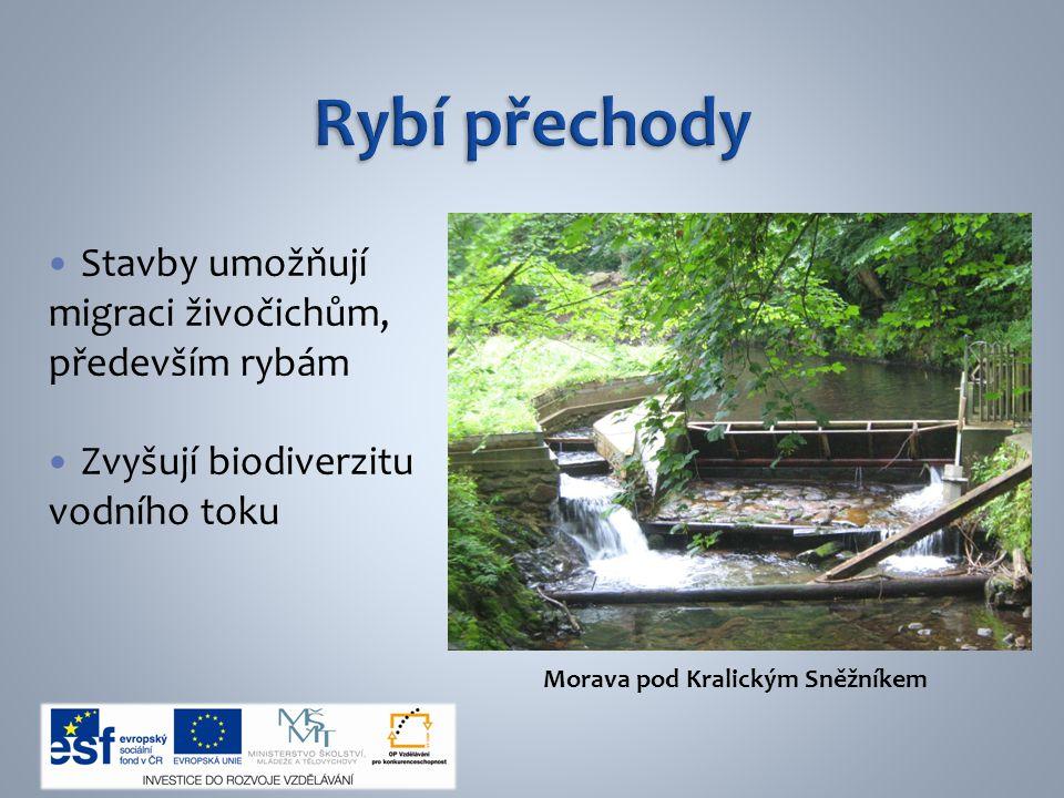Stavby umožňují migraci živočichům, především rybám Zvyšují biodiverzitu vodního toku Morava pod Kralickým Sněžníkem