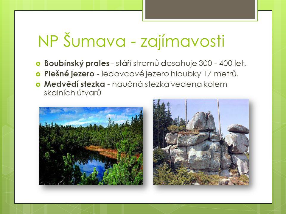 NP Šumava - zajímavosti  Boubínský prales - stáří stromů dosahuje 300 - 400 let.  Plešné jezero - ledovcové jezero hloubky 17 metrů.  Medvědí stezk
