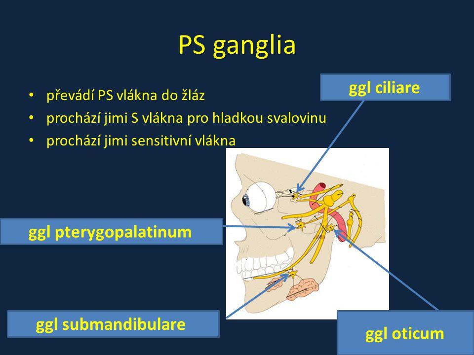 PS ganglia převádí PS vlákna do žláz prochází jimi S vlákna pro hladkou svalovinu prochází jimi sensitivní vlákna ggl ciliare ggl submandibulare ggl o