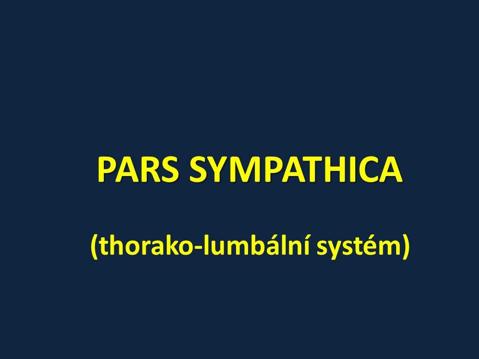 Pars abdominalis ganglia lumbalia + sacralia (pokračování paravertebrálních ganglií) ganglia prevertebrální – plexus aorticus abdominalis -> smíšený (především tvořen nn.