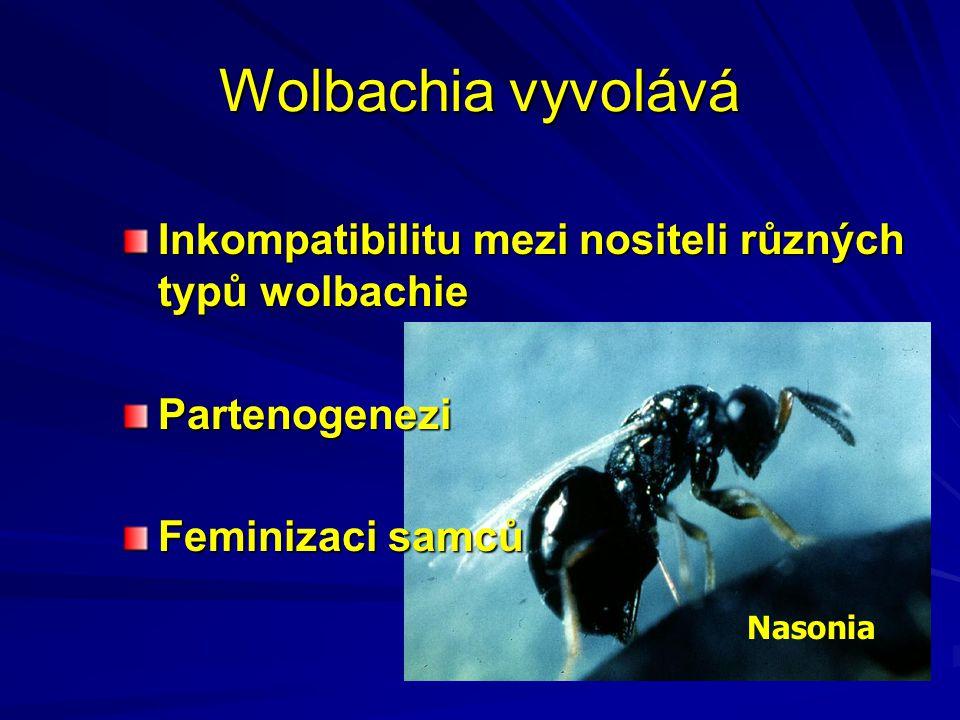 Wolbachia vyvolává Inkompatibilitu mezi nositeli různých typů wolbachie Partenogenezi Feminizaci samců Nasonia