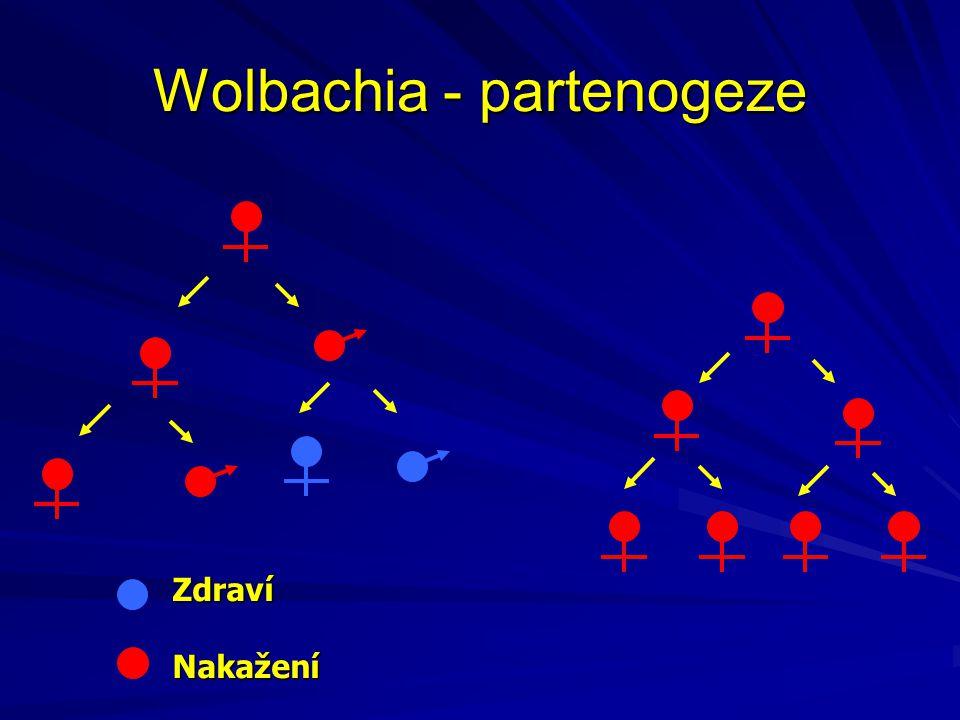 Wolbachia - partenogeze ZdravíNakažení
