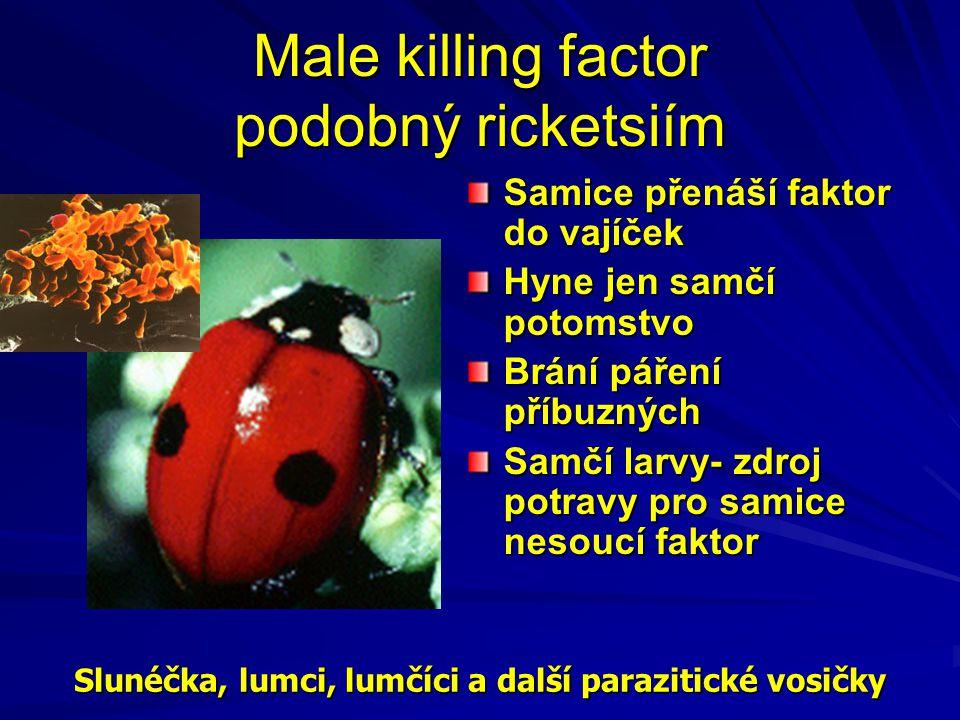 Male killing factor podobný ricketsiím Samice přenáší faktor do vajíček Hyne jen samčí potomstvo Brání páření příbuzných Samčí larvy- zdroj potravy pr