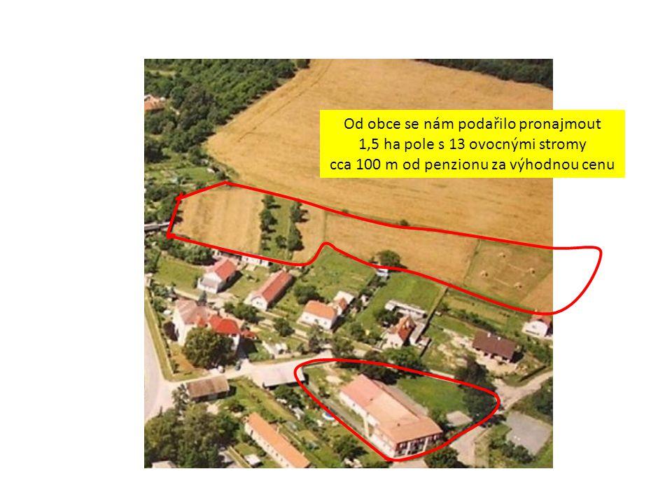 Od obce se nám podařilo pronajmout 1,5 ha pole s 13 ovocnými stromy cca 100 m od penzionu za výhodnou cenu