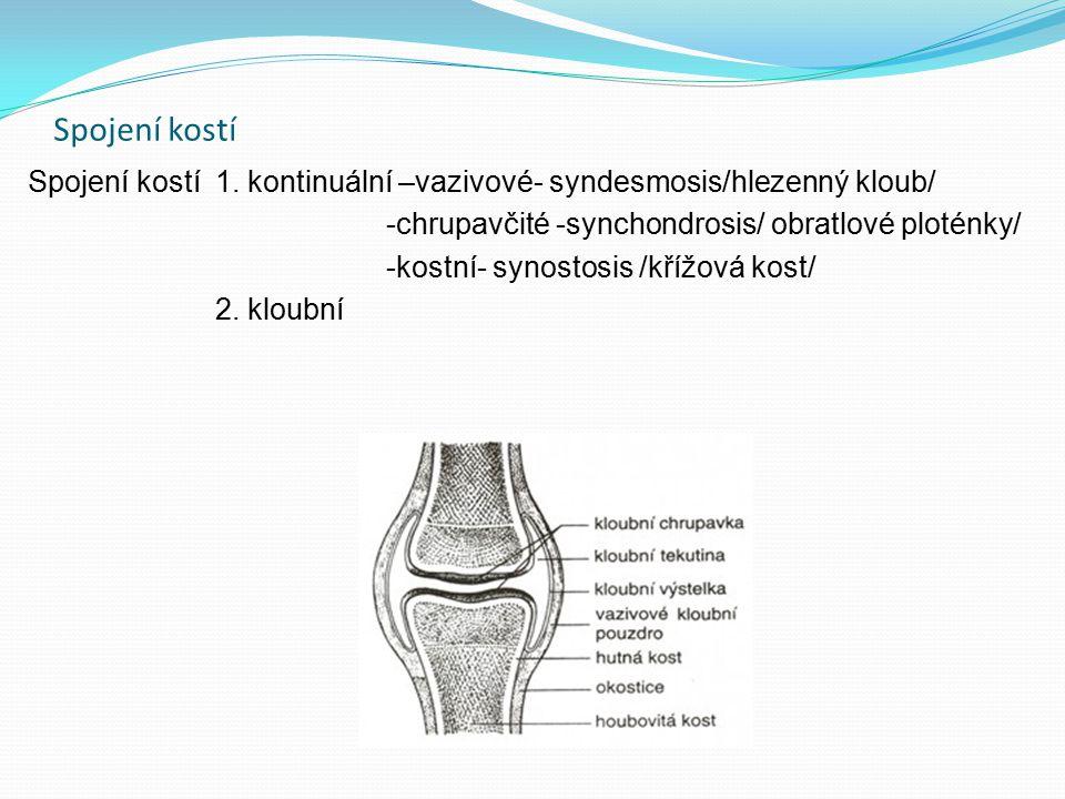 Spojení kostí Spojení kostí 1. kontinuální –vazivové- syndesmosis/hlezenný kloub/ -chrupavčité -synchondrosis/ obratlové ploténky/ -kostní- synostosis