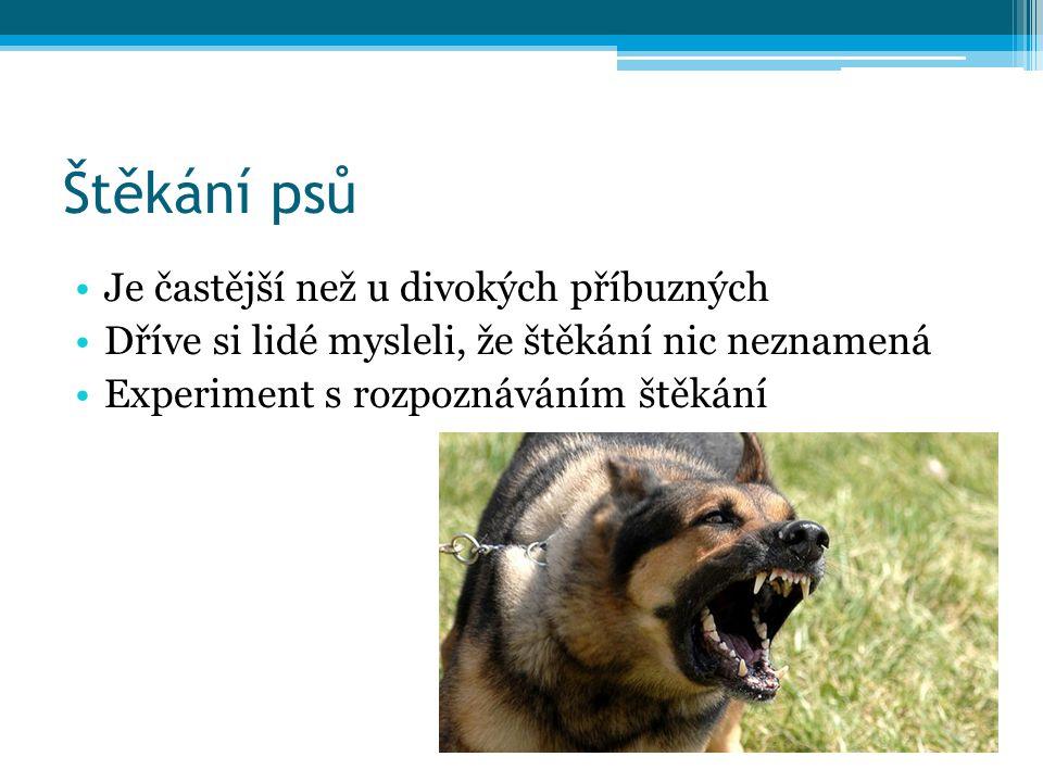 Štěkání psů Je častější než u divokých příbuzných Dříve si lidé mysleli, že štěkání nic neznamená Experiment s rozpoznáváním štěkání