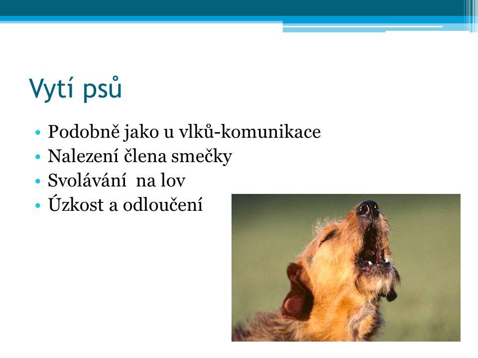 Vytí psů Podobně jako u vlků-komunikace Nalezení člena smečky Svolávání na lov Úzkost a odloučení