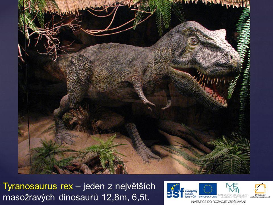 Tyranosaurus rex – jeden z největších masožravých dinosaurů 12,8m, 6,5t.