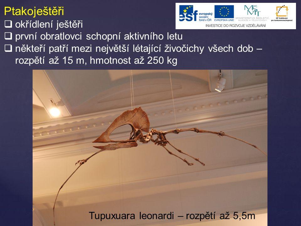 Ptakoještěři  okřídlení ještěři  první obratlovci schopní aktivního letu  někteří patří mezi největší létající živočichy všech dob – rozpětí až 15 m, hmotnost až 250 kg Tupuxuara leonardi – rozpětí až 5,5m