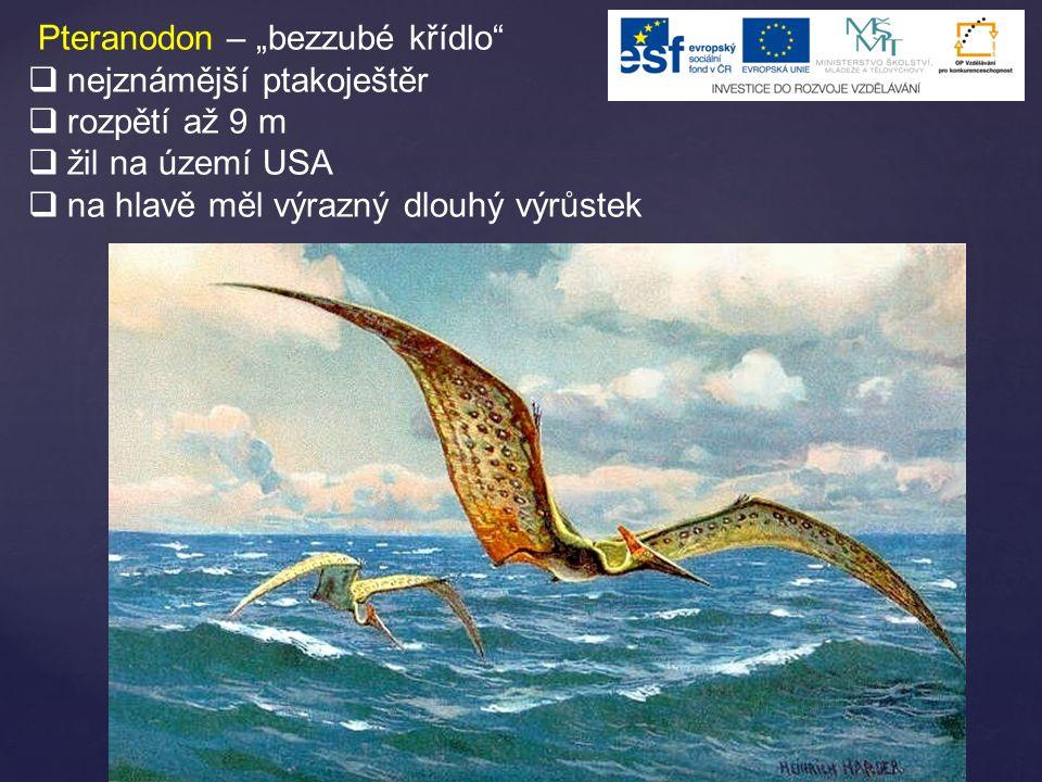 """Pteranodon – """"bezzubé křídlo""""  nejznámější ptakoještěr  rozpětí až 9 m  žil na území USA  na hlavě měl výrazný dlouhý výrůstek"""