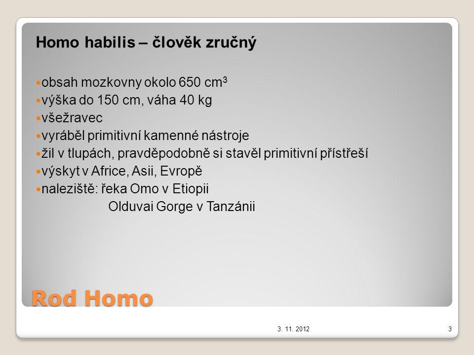 Rod Homo Homo erectus – člověk vzpřímený obsah mozkovny až okolo 1200cm 3 výška 170cm používal kolektivní lov, kamenné nástroje používal primitivní řeč znal oheň výskyt a naleziště v Africe, v Asii (člověk pekingský) v Evropě (člověk heidelberský) 3.