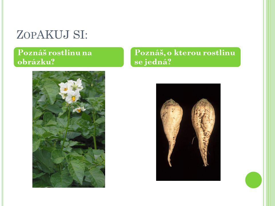 Z OP AKUJ SI: Poznáš rostlinu na obrázku Poznáš, o kterou rostlinu se jedná