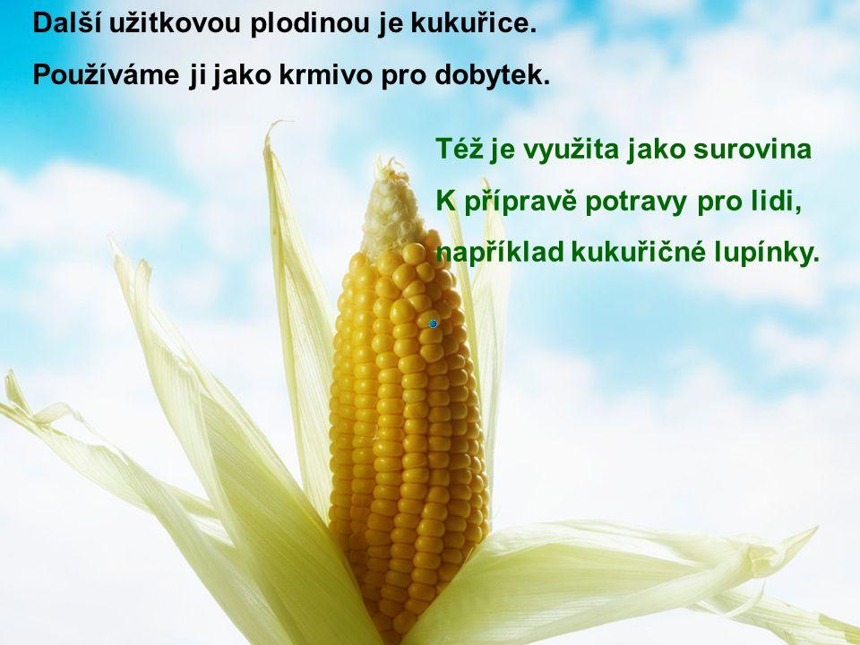 Další užitkovou plodinou je kukuřice. Používáme ji jako krmivo pro dobytek. Též je využita jako surovina K přípravě potravy pro lidi, například kukuři