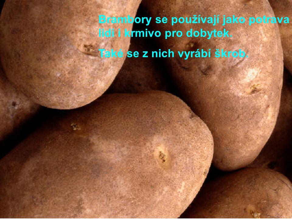 Brambory se používají jako potrava pro lidi i krmivo pro dobytek. Také se z nich vyrábí škrob.