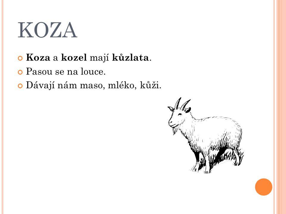 KOZA Koza a kozel mají kůzlata. Pasou se na louce. Dávají nám maso, mléko, kůži.