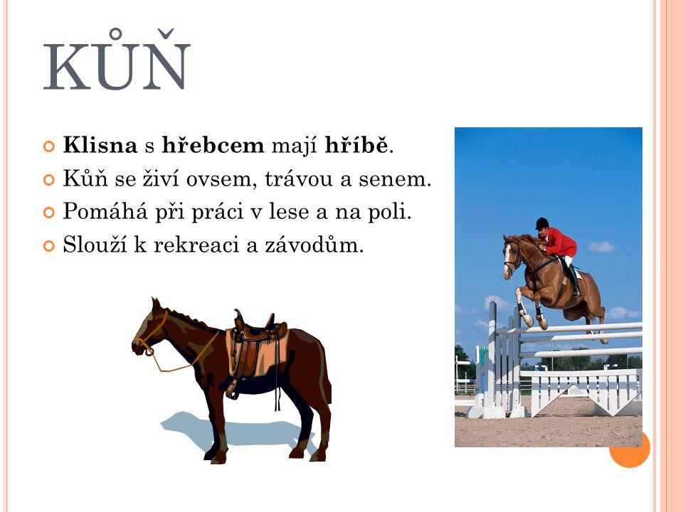 KŮŇ Klisna s hřebcem mají hříbě. Kůň se živí ovsem, trávou a senem. Pomáhá při práci v lese a na poli. Slouží k rekreaci a závodům.