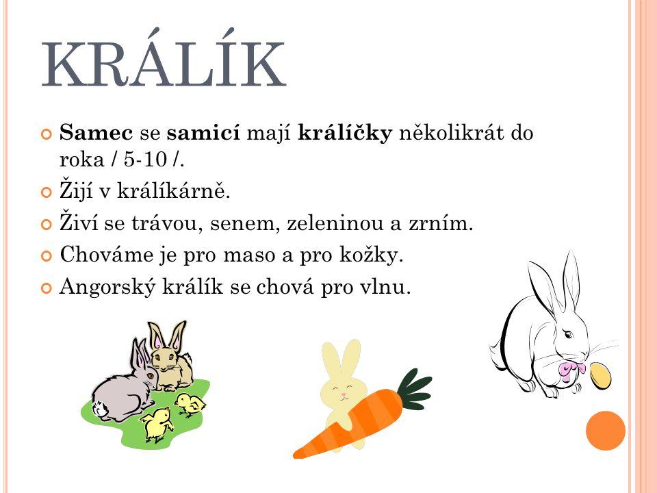 KRÁLÍK Samec se samicí mají králíčky několikrát do roka / 5-10 /. Žijí v králíkárně. Živí se trávou, senem, zeleninou a zrním. Chováme je pro maso a p