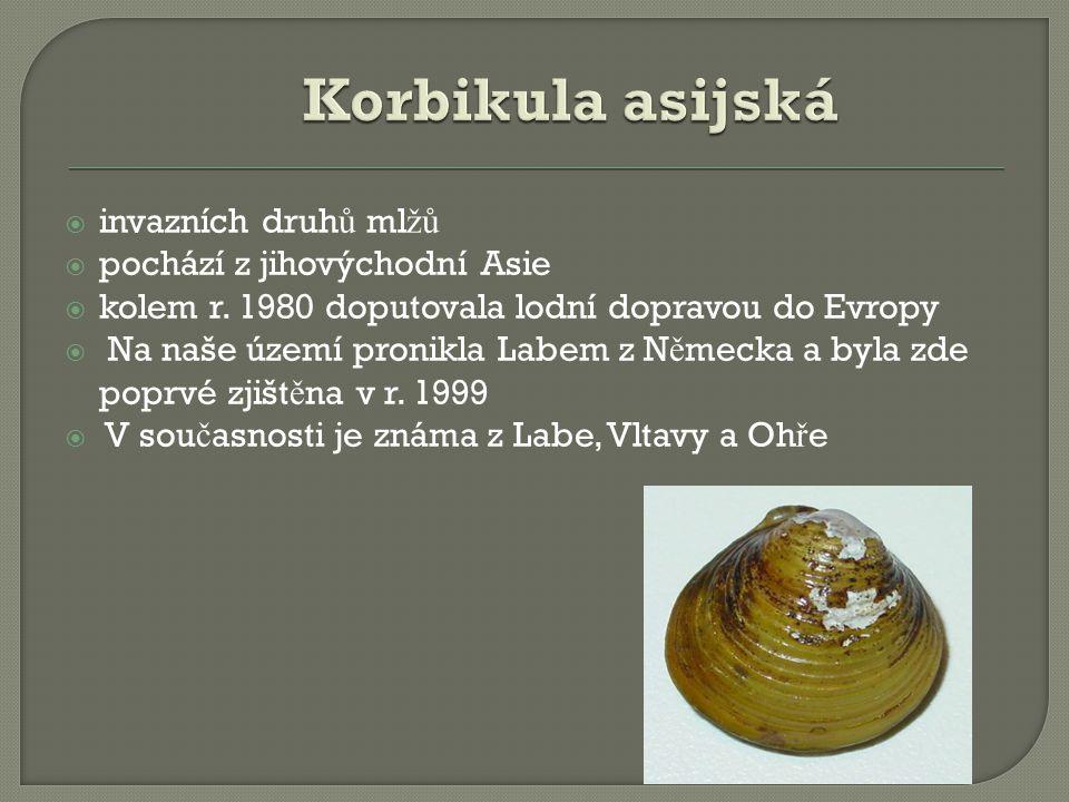  invazních druh ů ml žů  pochází z jihovýchodní Asie  kolem r.