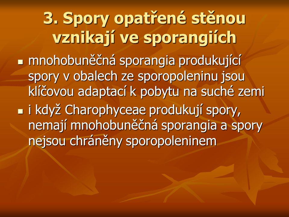 3. Spory opatřené stěnou vznikají ve sporangiích mnohobuněčná sporangia produkující spory v obalech ze sporopoleninu jsou klíčovou adaptací k pobytu n
