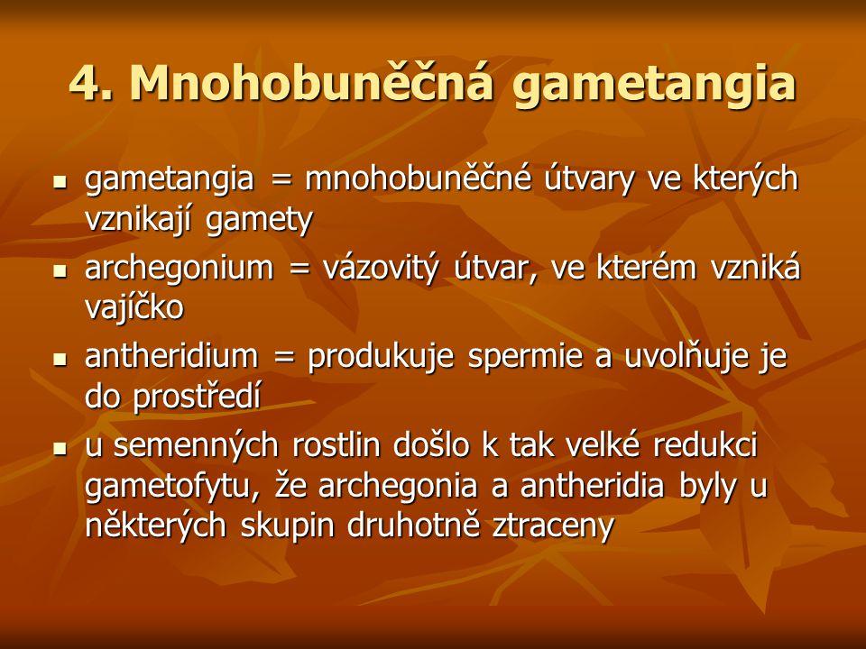 4. Mnohobuněčná gametangia gametangia = mnohobuněčné útvary ve kterých vznikají gamety gametangia = mnohobuněčné útvary ve kterých vznikají gamety arc