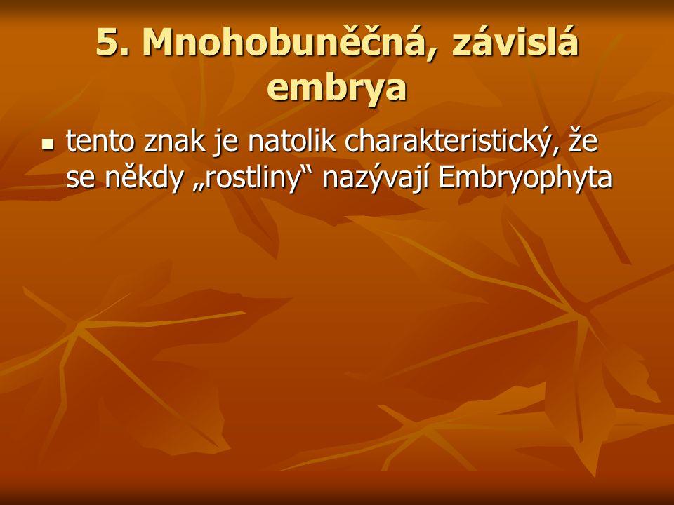 """5. Mnohobuněčná, závislá embrya tento znak je natolik charakteristický, že se někdy """"rostliny"""" nazývají Embryophyta tento znak je natolik charakterist"""