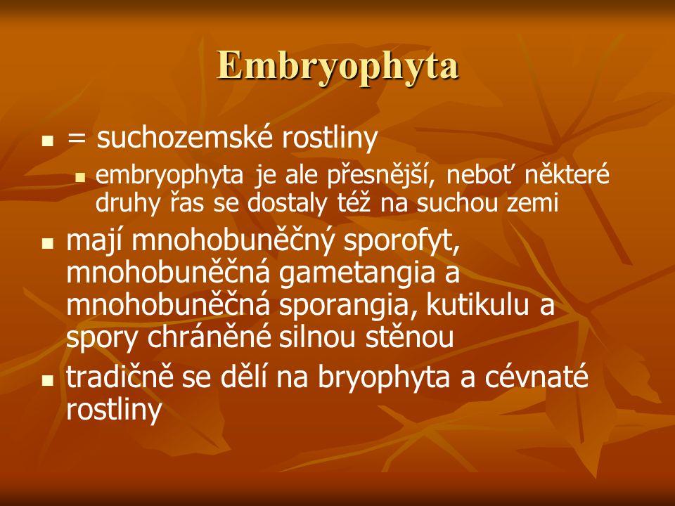 Embryophyta = suchozemské rostliny embryophyta je ale přesnější, neboť některé druhy řas se dostaly též na suchou zemi mají mnohobuněčný sporofyt, mnohobuněčná gametangia a mnohobuněčná sporangia, kutikulu a spory chráněné silnou stěnou tradičně se dělí na bryophyta a cévnaté rostliny