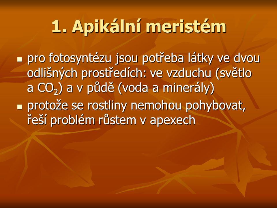 Systematika celkem 10 kmenů necévnaté: 3 (Hepatophyta, Anthoceratophyta, Bryophyta) necévnaté: 3 (Hepatophyta, Anthoceratophyta, Bryophyta) cévnaté: 7 cévnaté: 7 bez semene: 2 (Lycophyta, Pterophyta) bez semene: 2 (Lycophyta, Pterophyta) se semenem: 5 se semenem: 5 nahosemenné: 4 (Ginkgophyta, Cycadophyta, Gnetophyta, Conifera) nahosemenné: 4 (Ginkgophyta, Cycadophyta, Gnetophyta, Conifera) krytosemenné: 1 (Anthophyta) krytosemenné: 1 (Anthophyta)