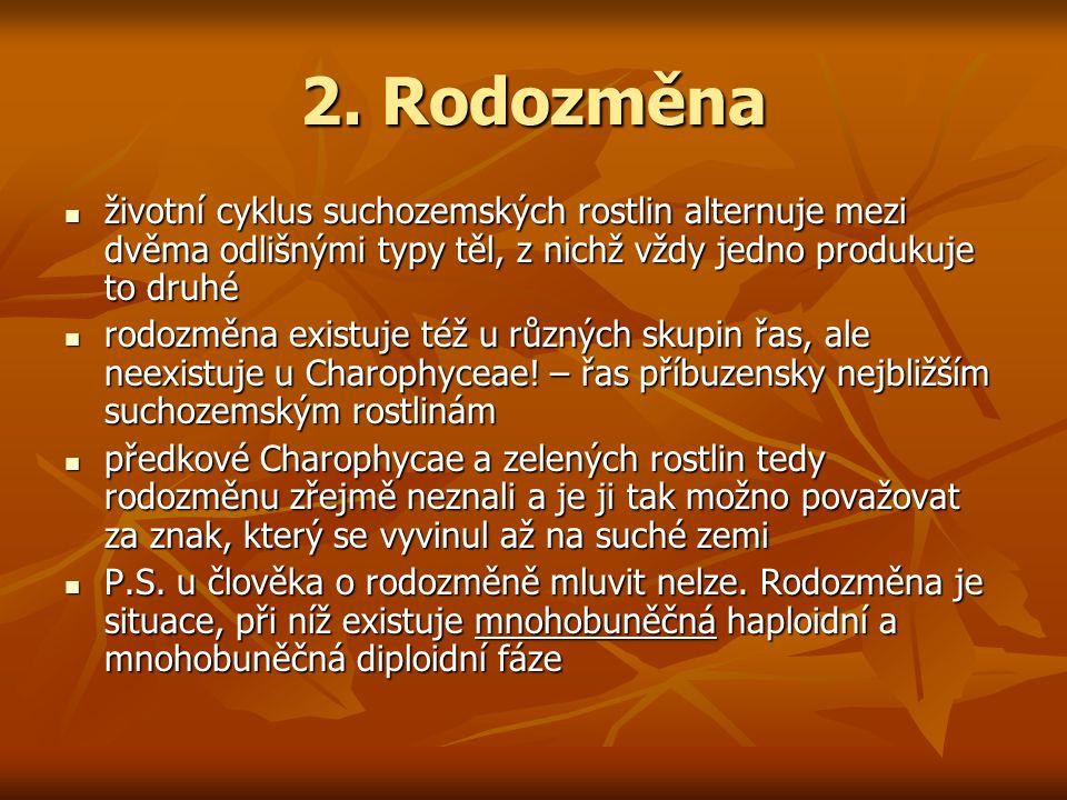 2. Rodozměna životní cyklus suchozemských rostlin alternuje mezi dvěma odlišnými typy těl, z nichž vždy jedno produkuje to druhé životní cyklus suchoz