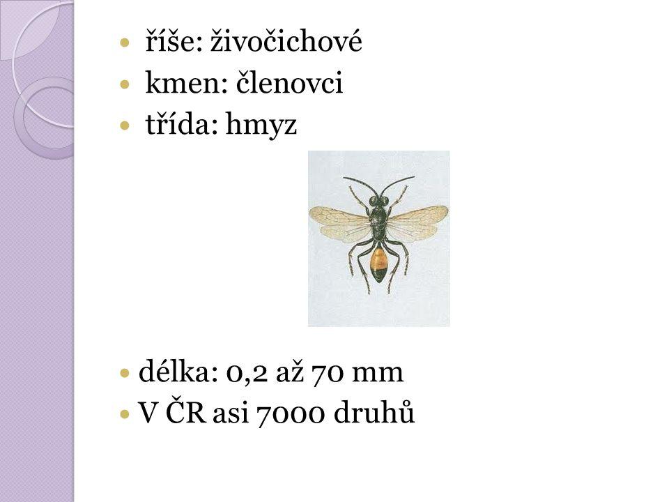 říše: živočichové kmen: členovci třída: hmyz délka: 0,2 až 70 mm V ČR asi 7000 druhů