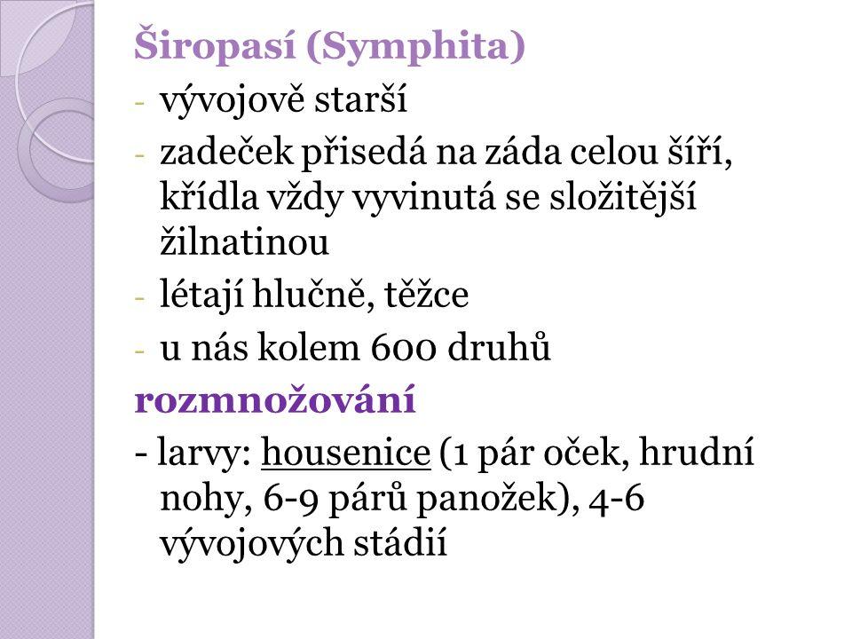 Širopasí (Symphita) - vývojově starší - zadeček přisedá na záda celou šíří, křídla vždy vyvinutá se složitější žilnatinou - létají hlučně, těžce - u n