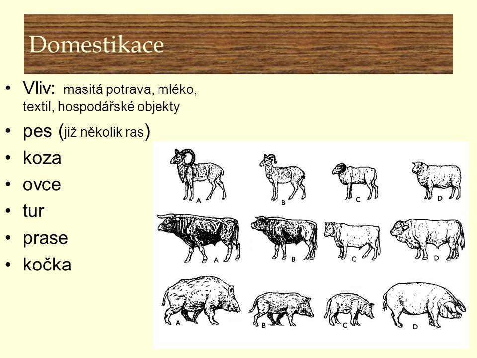 Domestikace Vliv: masitá potrava, mléko, textil, hospodářské objekty pes ( již několik ras ) koza ovce tur prase kočka