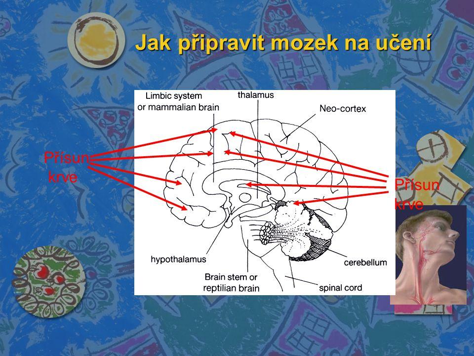 Jak připravit mozek na učení Přísun krve Přísun krve