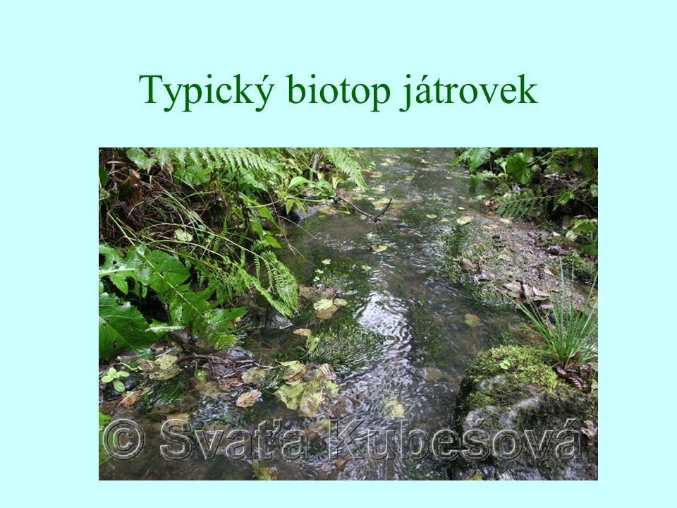 Typický biotop játrovek