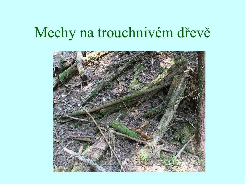 Mechy na trouchnivém dřevě