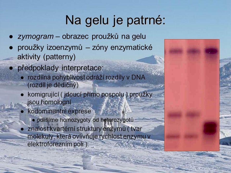 Na gelu je patrné: ● zymogram – obrazec proužků na gelu ● proužky izoenzymů – zóny enzymatické aktivity (patterny) ● předpoklady interpretace: ● rozdí