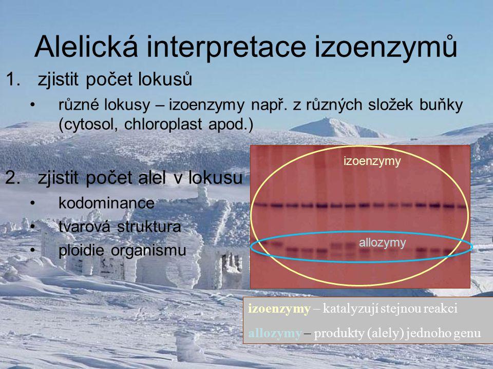 Alelická interpretace izoenzymů 1.zjistit počet lokusů různé lokusy – izoenzymy např. z různých složek buňky (cytosol, chloroplast apod.) 2.zjistit po