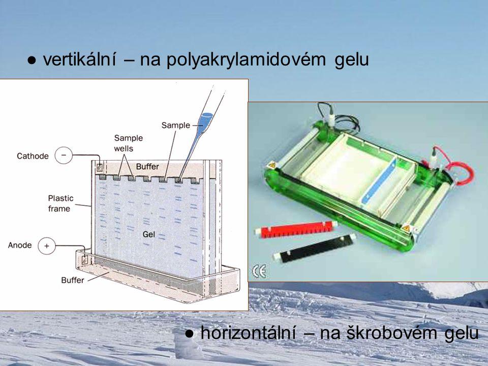 ● vertikální – na polyakrylamidovém gelu ● horizontální – na škrobovém gelu