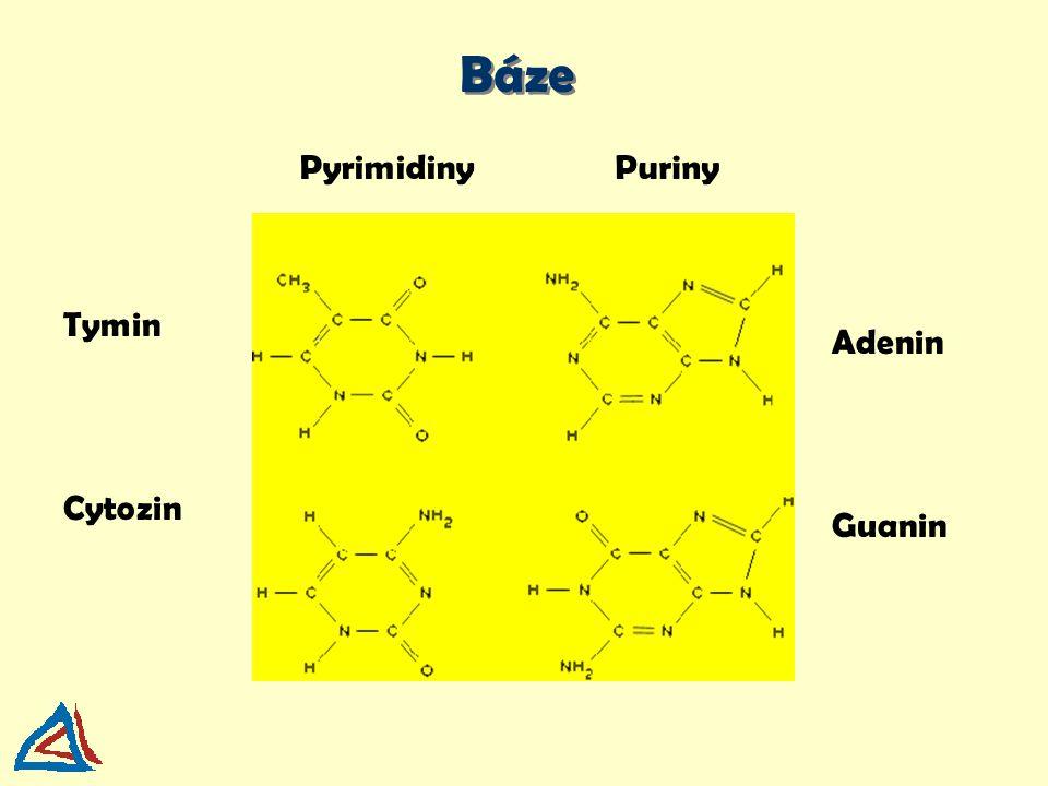 uracyl - PYRIMIDIN RNA: uracil místo tyminu adenin - PURIN guanin - PURIN tymin - PYRIMIDIN cytozin - PYRIMIDIN vodíkové vazby
