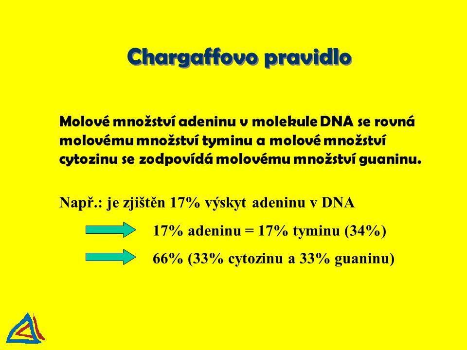 Chargaffovo pravidlo Molové množství adeninu v molekule DNA se rovná molovému množství tyminu a molové množství cytozinu se zodpovídá molovému množstv