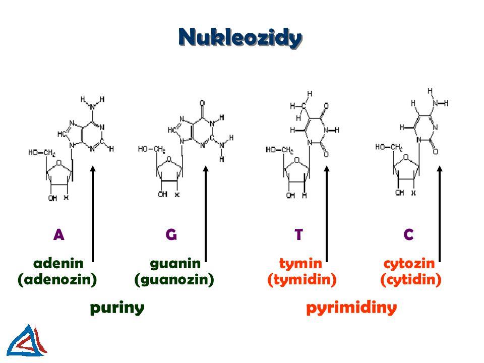 Nukleozidy AGTC adeninguanintymincytozin purinypyrimidiny (adenozin)(guanozin)(tymidin)(cytidin)