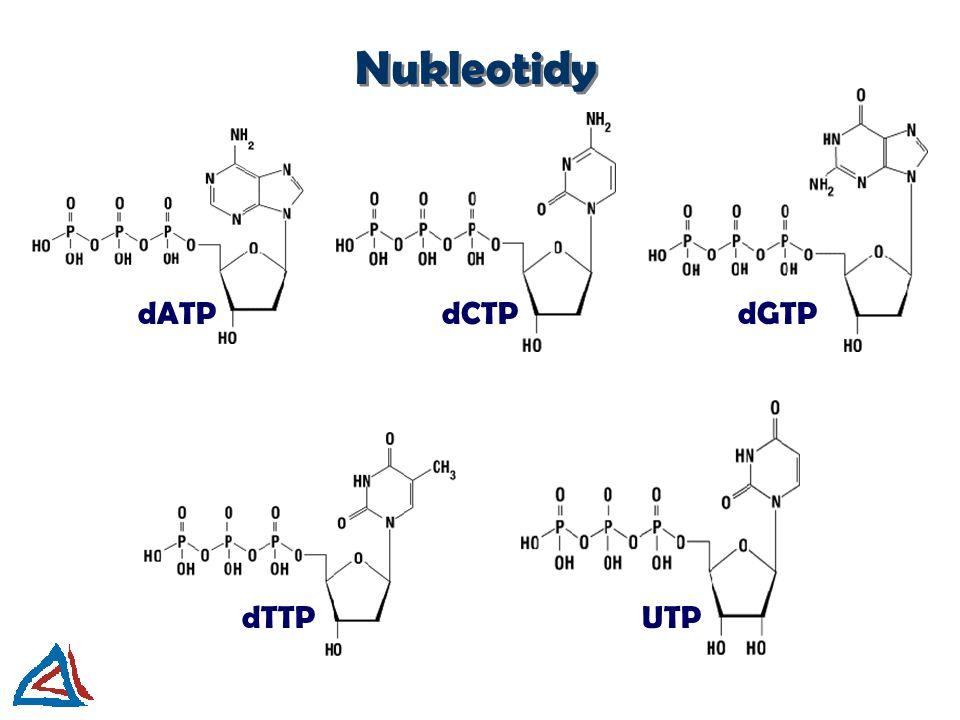 A G T C Oligonukleotid fosfodiesterová vazba glykozidová vazba 3´-konec oligonukleotidu 5´-konec oligonukleotidu