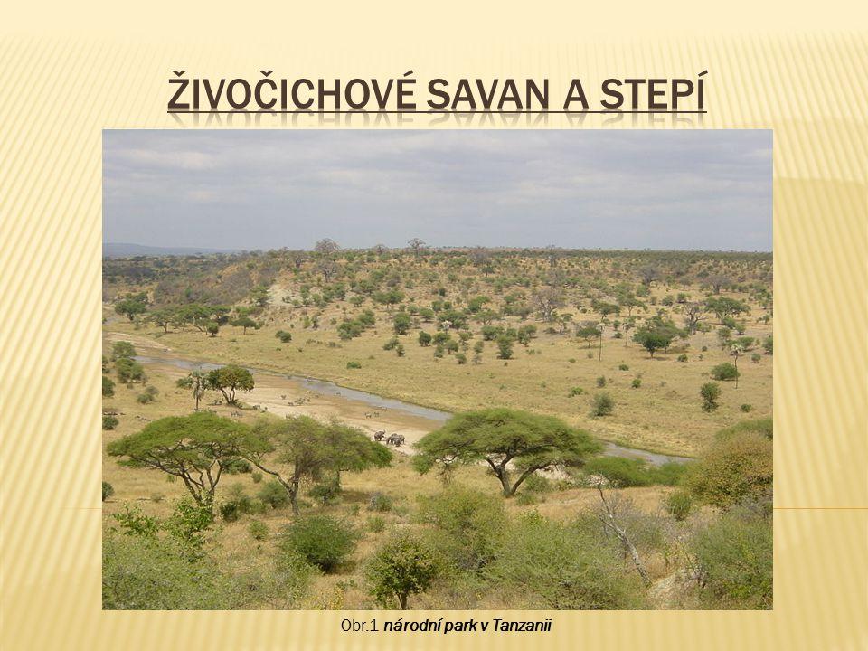  Savany - travnaté ob, oblasti tropických a subtropických oblastí, střídá se zde období dešťů a sucha, zřídka zde rostou stromy jako např.