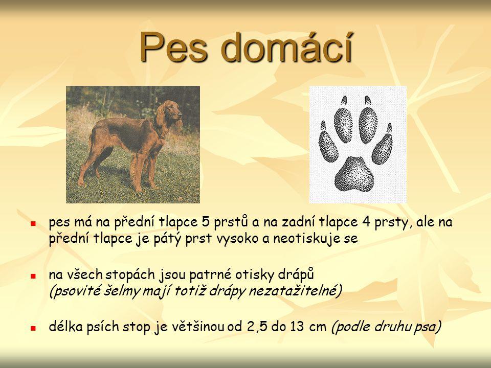 Pes domácí pes má na přední tlapce 5 prstů a na zadní tlapce 4 prsty, ale na přední tlapce je pátý prst vysoko a neotiskuje se na všech stopách jsou patrné otisky drápů (psovité šelmy mají totiž drápy nezatažitelné) délka psích stop je většinou od 2,5 do 13 cm (podle druhu psa)